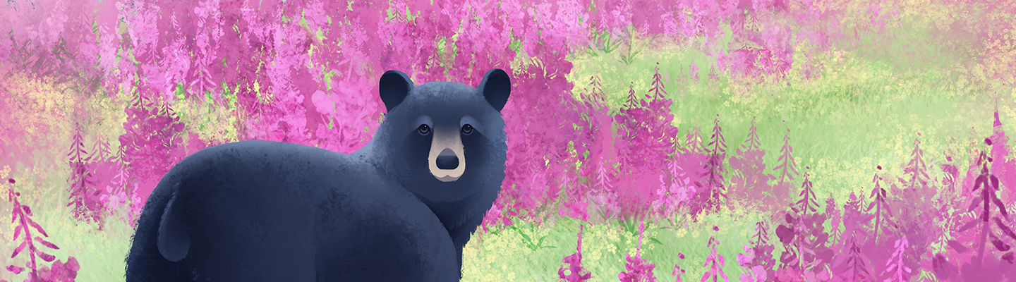 Switch banner to use Black Bear in Fireweed